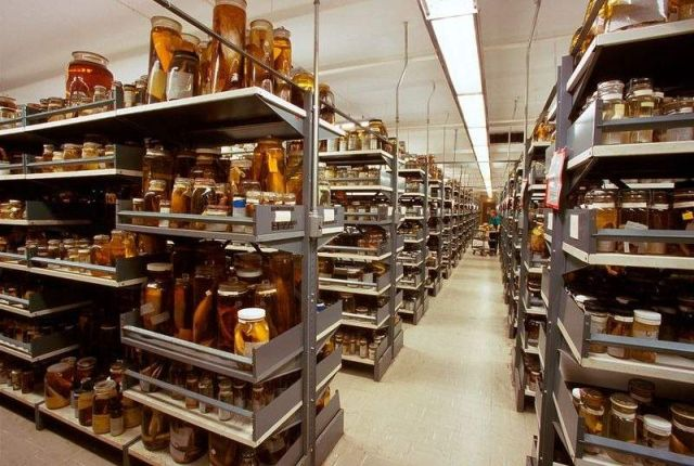 Secret Collections of The National Museum of Natural History (9)