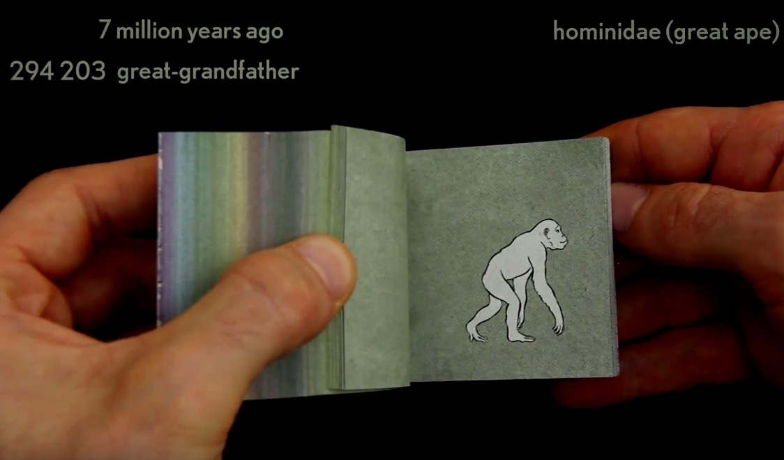 550 million years of human evolution flipbook