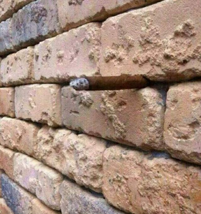 The amazing Brick Wall Illusion 1