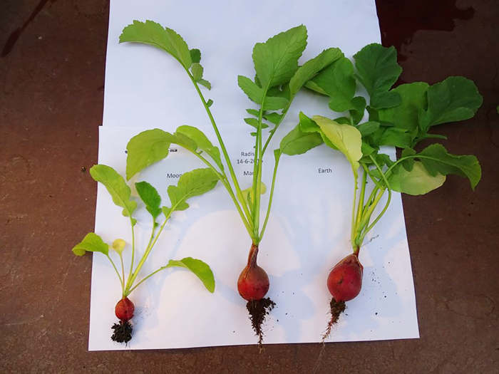 First edible Plants grown in Mars-like soil (1)