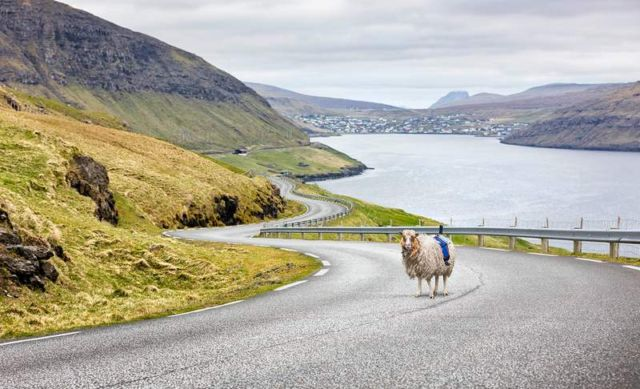 Sheep-view 360 in the Faroe Islands