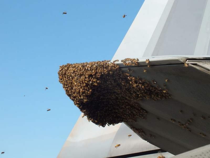 F-22 Jet fighter Grounded by Bees