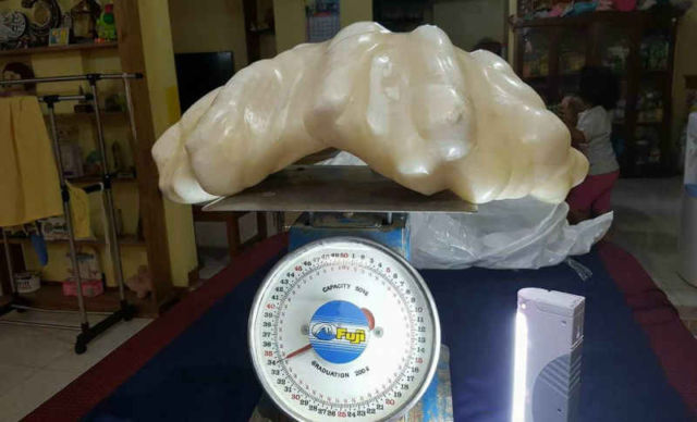 Fisherman kept a $100 million Pearl under his Bed