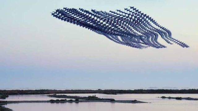 Ornitographies- majestic images of birds (9)