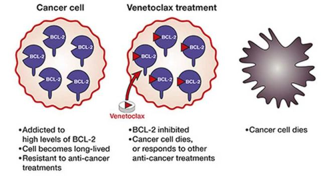 Venetoclax impressive new Cancer drug