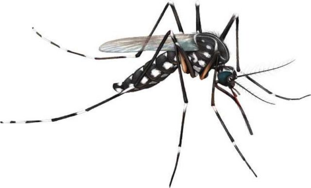 genetically-engineered-mosquitoes-can-reduce-diseases-1