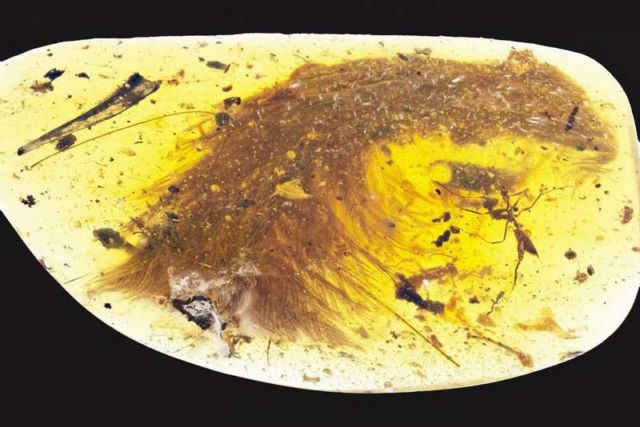 100 million years old Dinosaur Feathers encased in amber