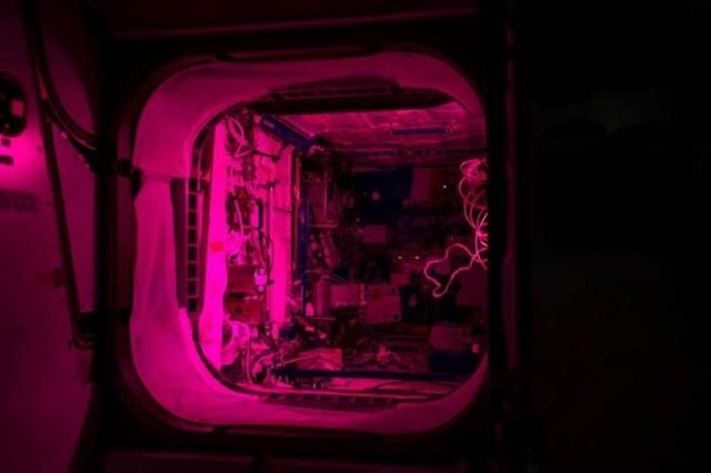 The Veggie experiment illuminates the Columbus module