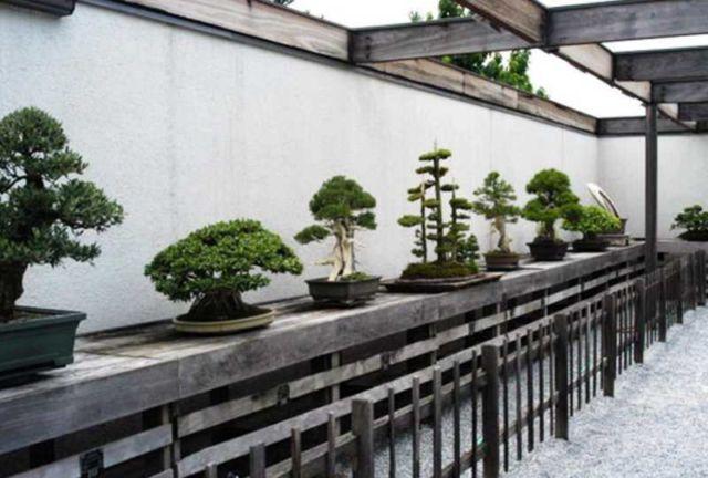 National Bonsai Museum in Washington