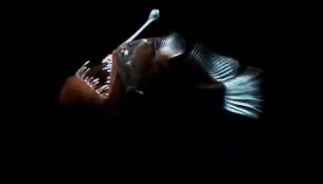 Strange Bioluminescent Deep Sea Creatures