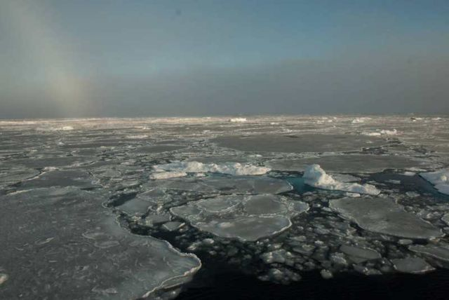 Summer Arctic Sea Ice