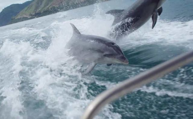 Breathtaking slo-mo video of Dolphins