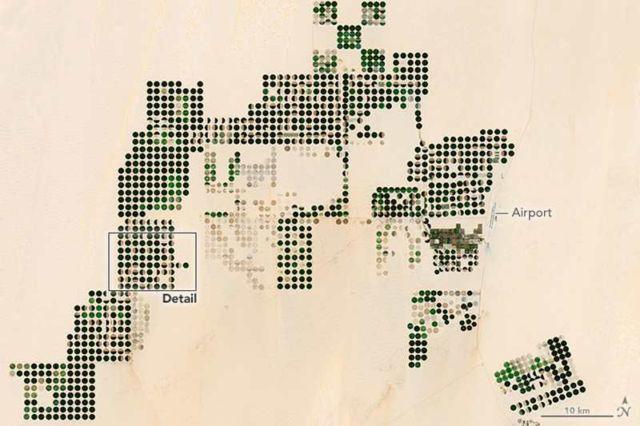 Cultivating Egypt's Desert