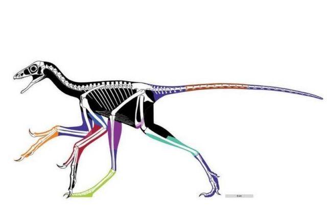 Anchiornis huxleyi a small, paravian dinosaur