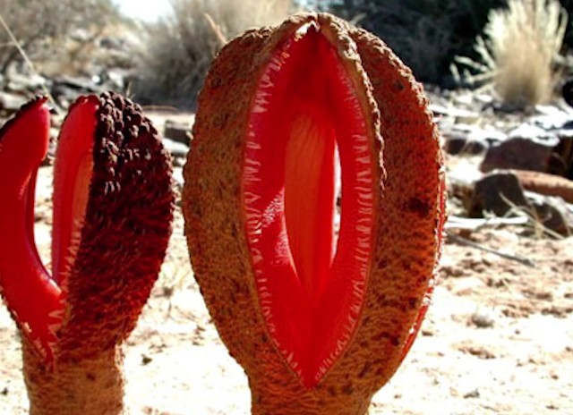 The Strangest Plant in the World