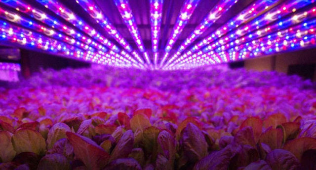 The rise of Vertical Farms