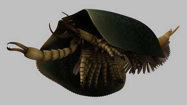 Tokummia Sea Monster