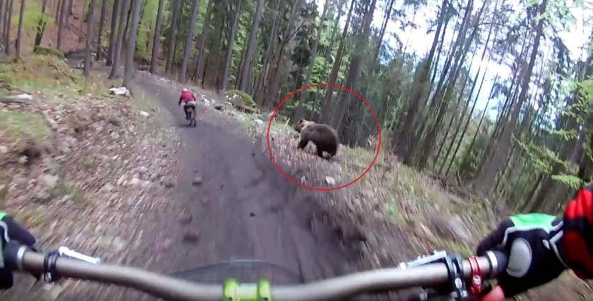 Bear on the Bikepark