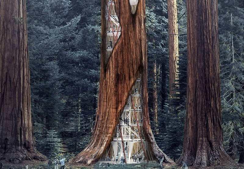 Giant Sequoia Skyscraper concept (4)