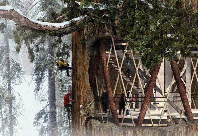 Giant Sequoia Skyscraper concept (3)