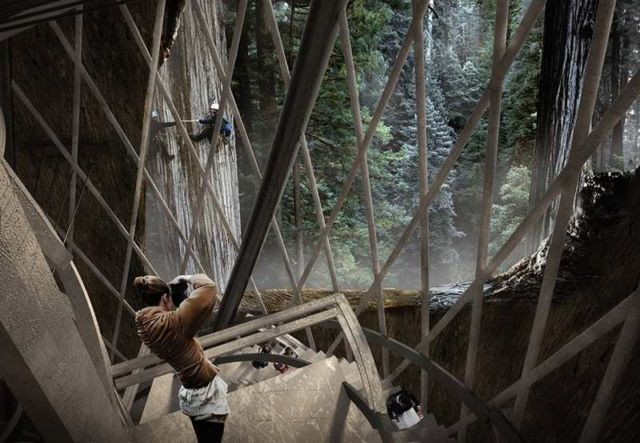 Giant Sequoia Skyscraper concept (2)