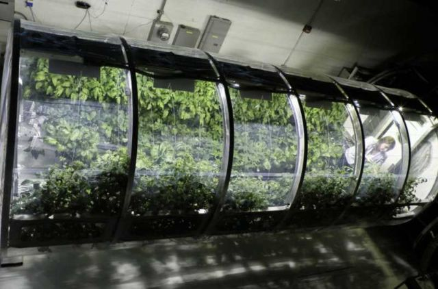 Greenhouse for sustainable Farming on Mars
