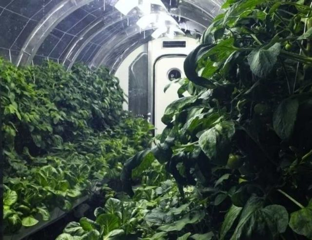 Greenhouse for sustainable Farming on Mars (2)