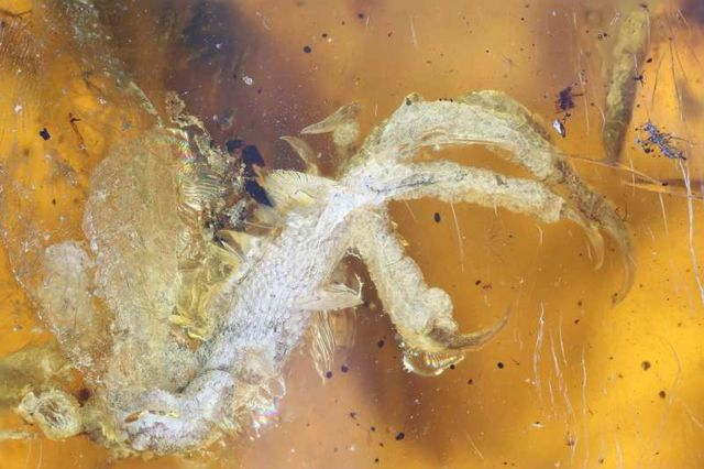 100 million-year-old Bird incredibly well-preserved