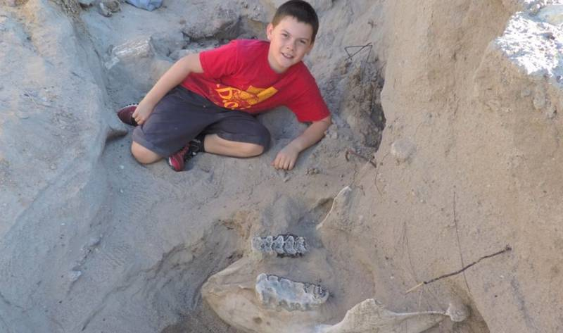 Boy discovers a 1.2 million-year-old Stegomastodon Fossil