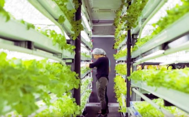 Shipping-container farm