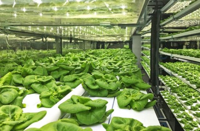 Shipping-container farm produces the equivalent of 4 acres