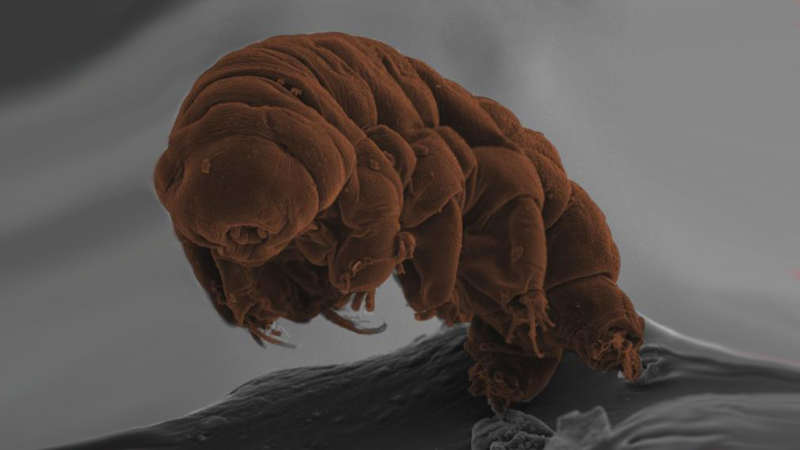 This is where these freakish Tardigrade came from