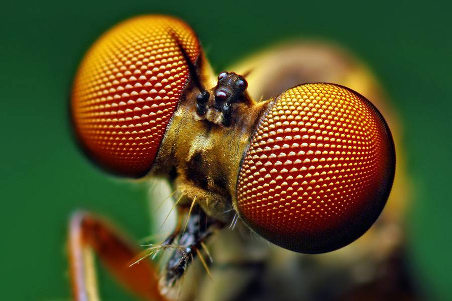 New Solar Cell design inspired by Insect eyes