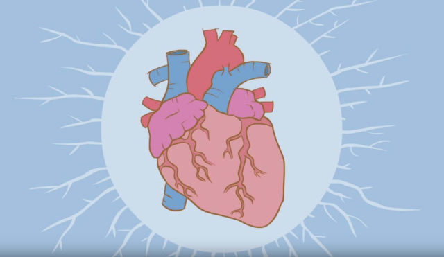 How the heart actually pumps blood 1