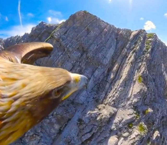 Gliding with Eagle