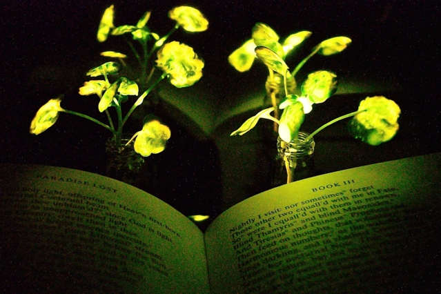 Scientists create plants that glow