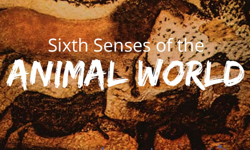 Sixth Senses in the Animal world
