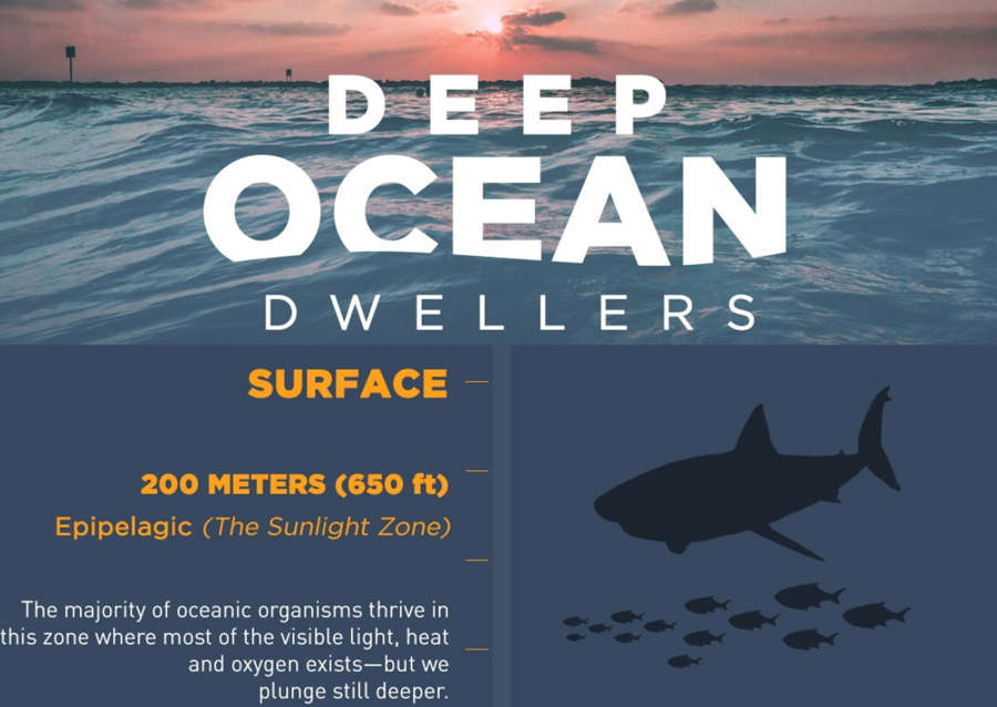 Deep Ocean Dwellers – infographic