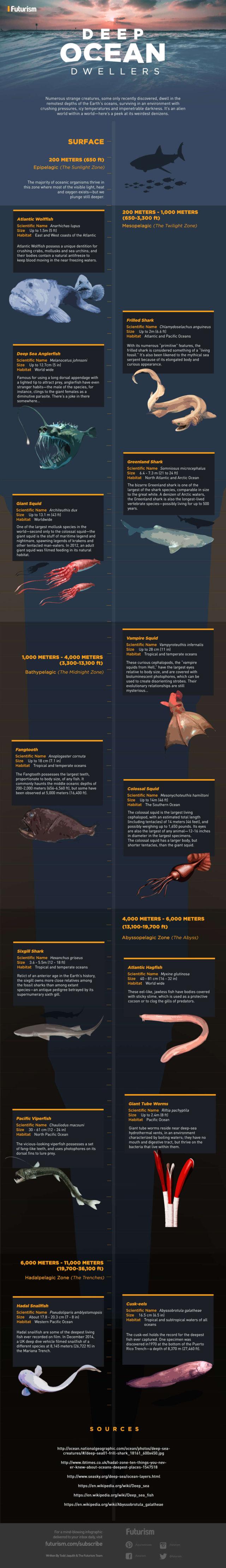 Deep Ocean Dwellers - infographic