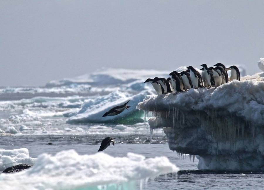 Previously unknown 'supercolony' of Penguins discovered