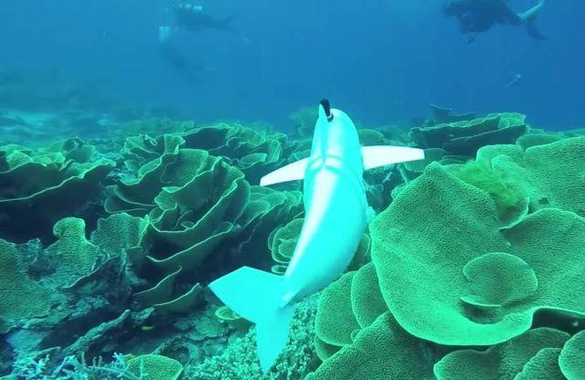 Robotic Fish swims in the Ocean
