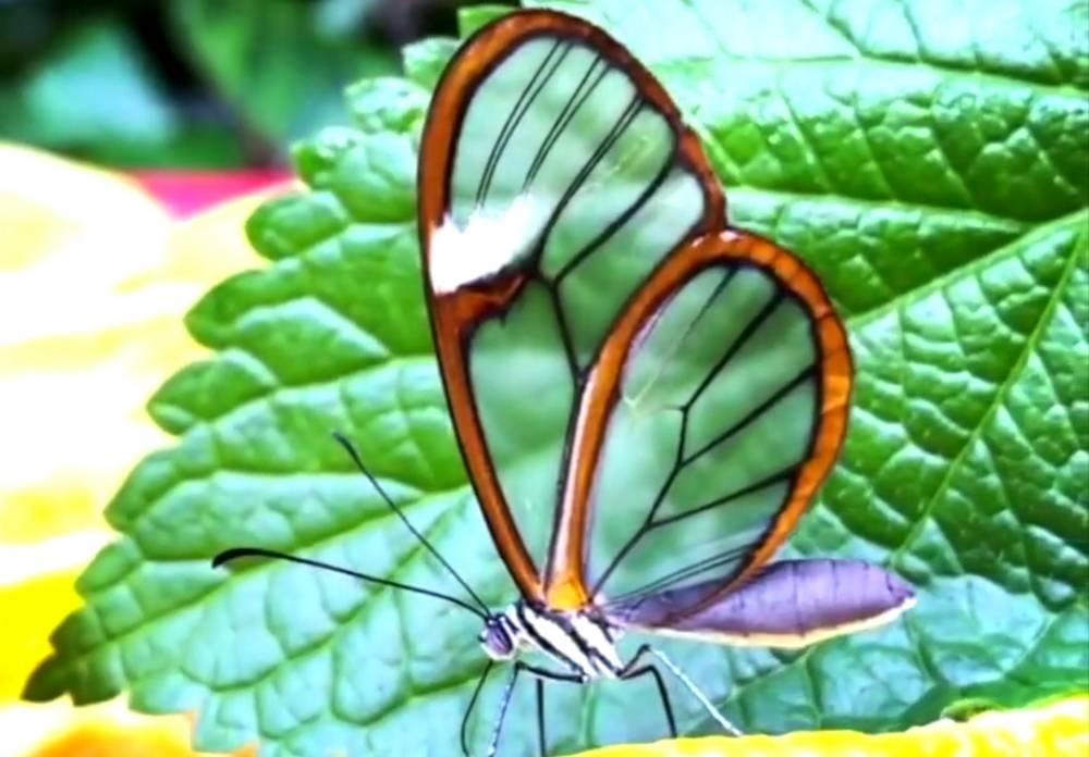 Amazing Colorful Creatures