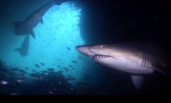 How Deep is Ocean in Reality
