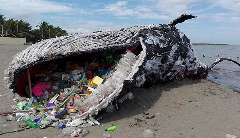 Plastic Pollution kills another Whale