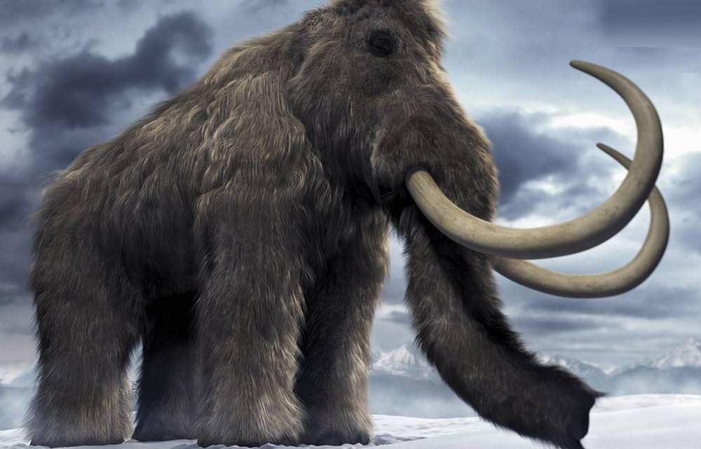 Woolly Mammoths could come back to Life