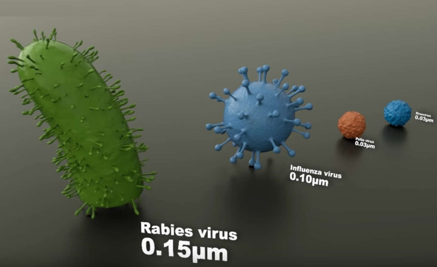 Microorganisms Size Comparison