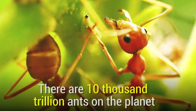 Ants are incredibly smart and powerful