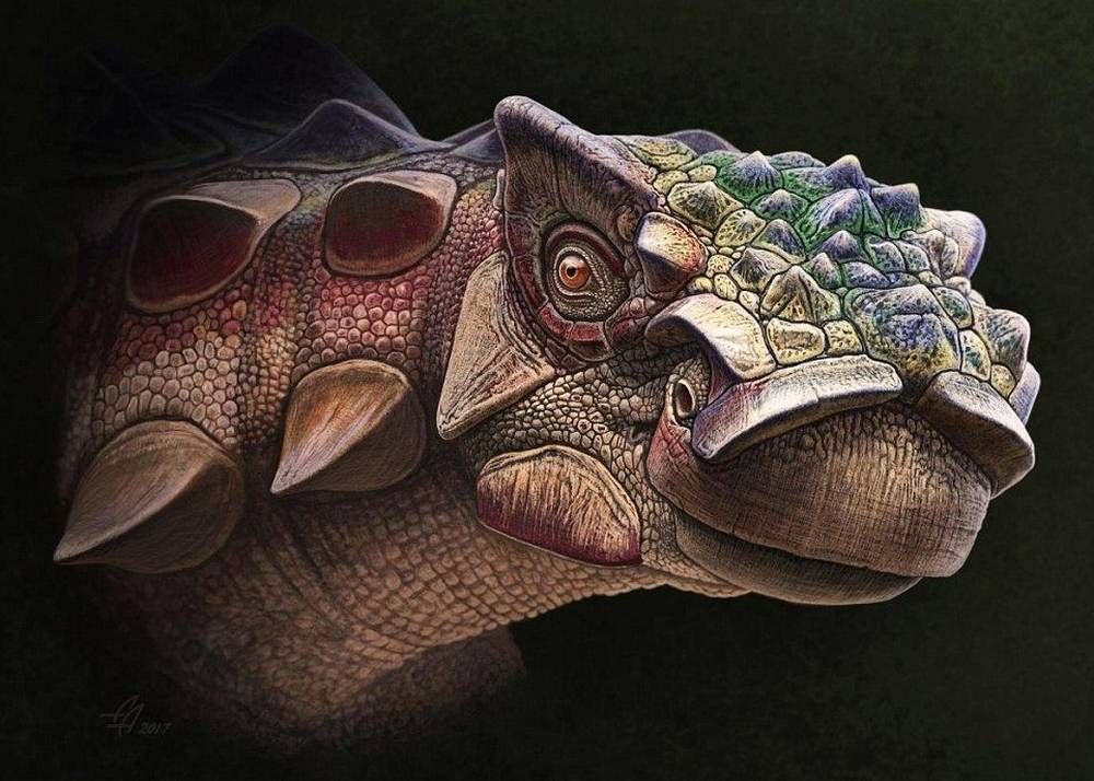 New species of Armored Dinosaur discovered