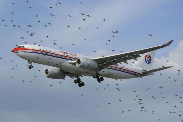Using Drone to Herd Birds Away from Airports