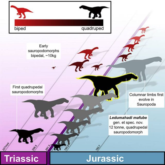 Giant Dinosaur from the Earliest Jurassic has been found